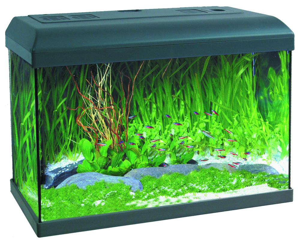Beta kit acuario para peces tropicales rossinyol for Comida para peces tropicales acuario